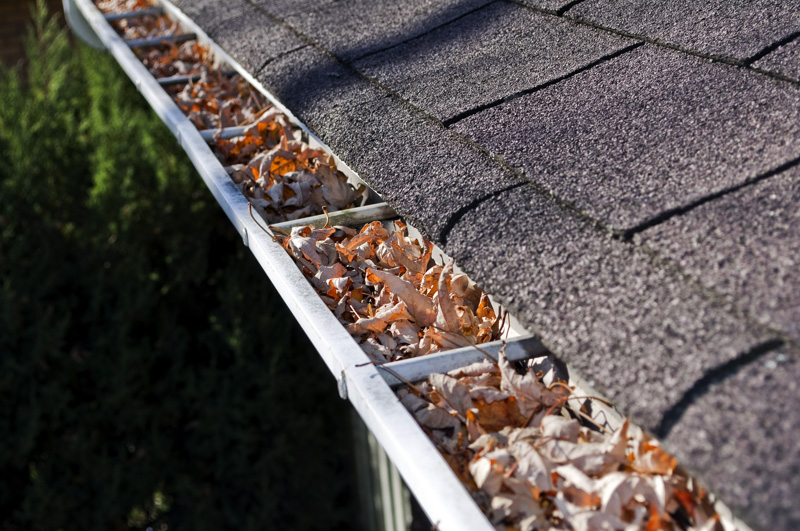 Home maintenance: fall leaves clogging rain gutter.